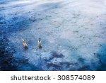 Wild Ducks Mallard Frozen Lake