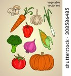 vegetable sketch or ingredient... | Shutterstock .eps vector #308586485