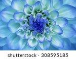 Dahlia Flower Closeup. Macro....