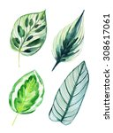 Four Tropical Leaves Isolated...