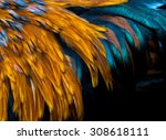 Exotic Texture Feathers...