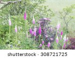 Lots Of The Toxic Foxglove ...