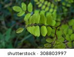 macro plant   Shutterstock . vector #308803997