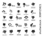 bouquet icons set   isolated on ...