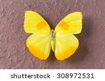 Yellow Butterfly From Tingo...