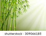 bamboo and sunlight vector