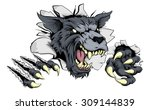 a scary wolf mascot ripping... | Shutterstock .eps vector #309144839