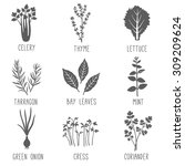 fresh herbs and spices icon set.... | Shutterstock .eps vector #309209624