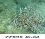 Small photo of Saballa polychaeta - Pacific Ocean, Thailand