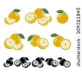 grapefruit set. vector | Shutterstock .eps vector #309261845