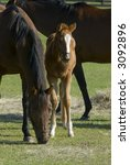 Horse Equine Baby And Mare...