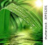 green grass with raindrops... | Shutterstock . vector #30931201