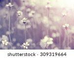 Summer Beautiful Flowers On...