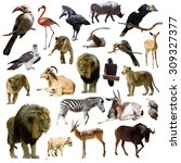 Lions And Other African Animals....