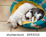 Stock photo kitten and puppy sleeping and cuddling 3093510
