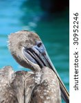 Close Up Of A Pelican In The...