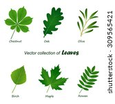 set of vector green leaves on... | Shutterstock .eps vector #309565421