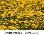 Dandelions Weeds Or Flowers