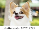 Stock photo cute puppy dog shallow depth of field 309619775