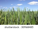 beautiful farmlands with lovely ... | Shutterstock . vector #30968485