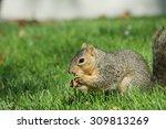 Cute Squirrel Eating Food On...