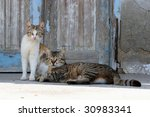 Two Cats On A Greek Island