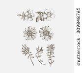 engraved hand drawn... | Shutterstock .eps vector #309848765