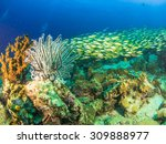 schooling of fish and corals | Shutterstock . vector #309888977