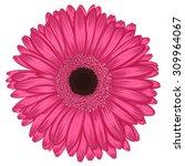Beautiful Pink Gerbera Isolated ...