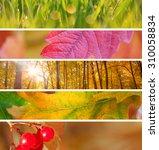 Set Of Different Autumn Banner...