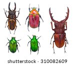 close up on beetle or bugs... | Shutterstock . vector #310082609