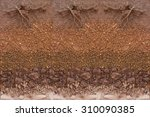 Root In Soil