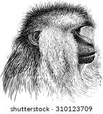 macaque   Shutterstock .eps vector #310123709