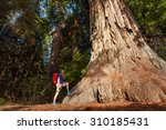 guy stands near big tree in...
