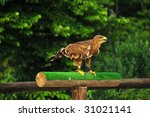 A Royal Eagle Prepares For Tak...