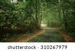 the road in beautiful green... | Shutterstock . vector #310267979