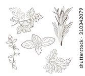 fresh parsley  thyme  rosemary