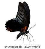 The Butterfly  Great Mormon ...
