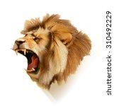 roaring lion  head vector... | Shutterstock .eps vector #310492229