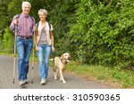 Stock photo happy senior couple hiking with labrador retriever dog in summer 310590365