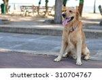 golden retriever | Shutterstock . vector #310704767