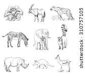 Character Design Set Of Animal...