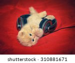Little Kitten Listening Music ...