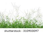 The Grass Isolated On White