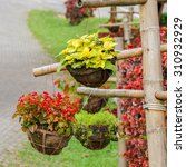 Small photo of Close up of yellow coleus plant and red begonia growth in flower pot hanging on side the road