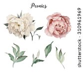 Peonies And Leaves  Watercolor...