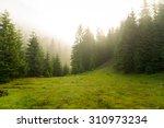 Beautiful green pine trees on...