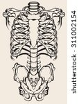 detailed anatomical...   Shutterstock . vector #311002154
