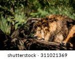 lion | Shutterstock . vector #311021369