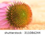 Pink Cone Flower Close Up